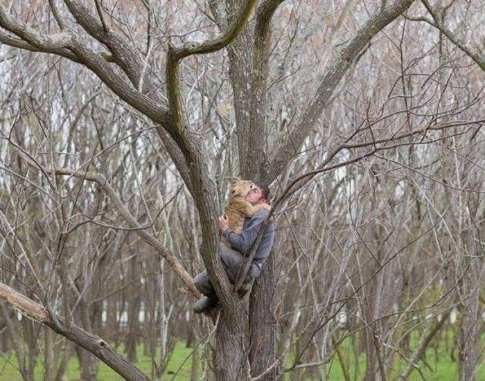 cool pic - Tree