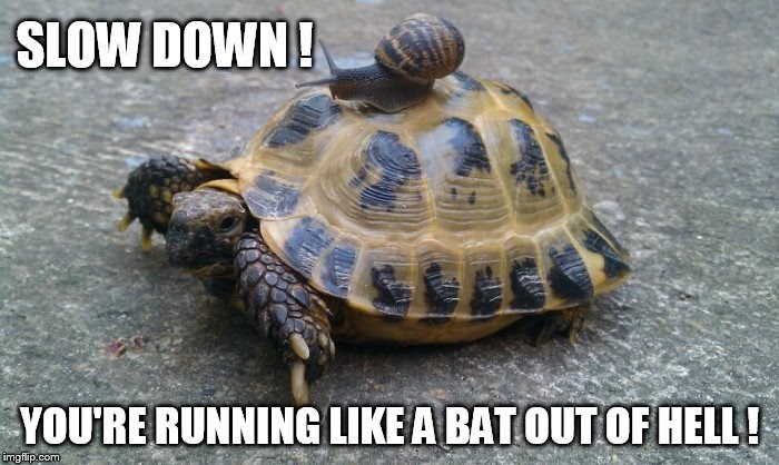 snail meme - Tortoise - SLOW DOWN! YOURE RUNNING LIKE A BAT OUT OF HELL! imgflip.com