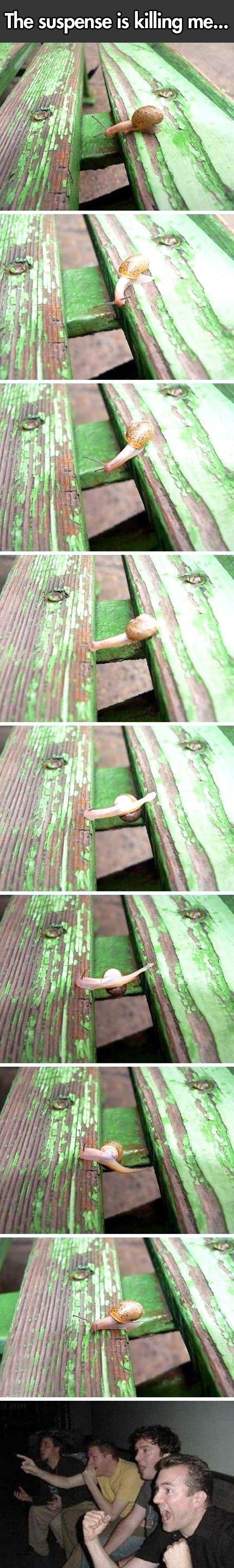 snail meme - Green - The suspense is killing me...