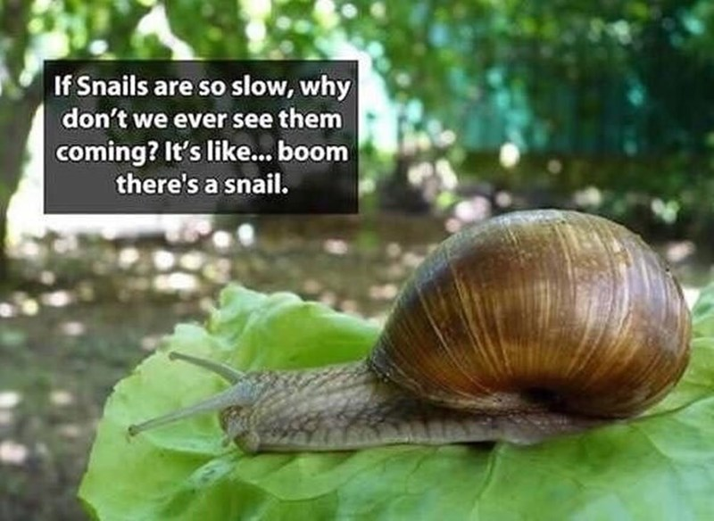 snail meme - Snails and slugs - If Snails are so slow, why don't we ever see them coming? It's like... boom there's a snail.