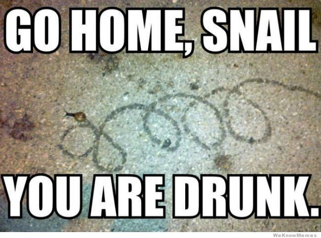 snail meme - Text - GO HOME, SNAIL YOU ARE DRUNK We KnowMemes