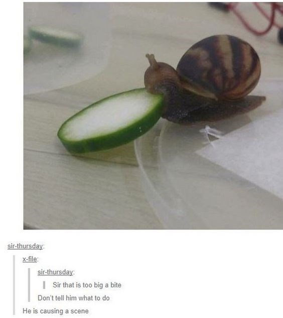 snail meme - Snail - sir-thursday x-file sir-thursday I Sir that is too big a bite Don't tell him what to do He is causing a scene