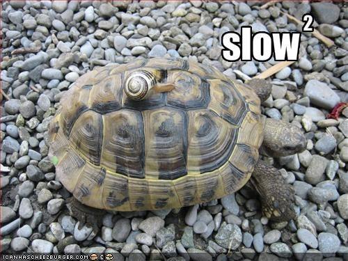 snail meme - Tortoise - 2. slow ICANHASCHEE2EURGER. COM