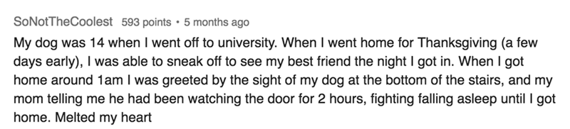 askreddit - Text - SoNotTheCoolest 593 points 5 months ago was 14 when I went off to university. When I went home for Thanksgiving (a few My dog days early), I was able to sneak off to see my best friend the night I got in. When I got home around 1am I was greeted by the sight of my dog at the bottom of the stairs, and my mom telling me he had been watching the door for 2 hours, fighting falling asleep until I got home. Melted my heart