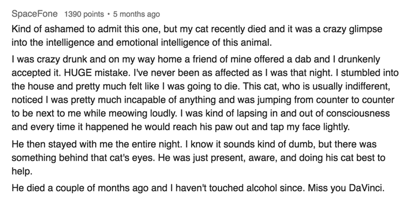 askreddit - Text - SpaceFone 1390 points 5 months ago Kind of ashamed to admit this one, but my cat recently died and it was a crazy glimpse into the intelligence and emotional intelligence of this animal. I was crazy drunk and on my way home a friend of mine offered a dab and I drunkenly accepted it. HUGE mistake