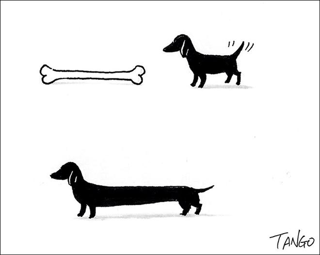 Dog - TANO