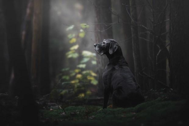 dog - Black