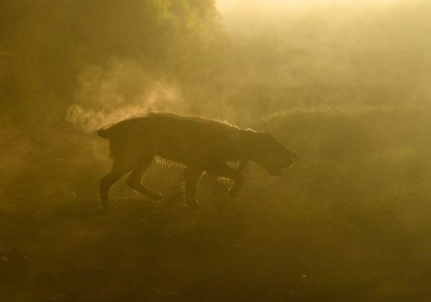 dog - Atmospheric phenomenon