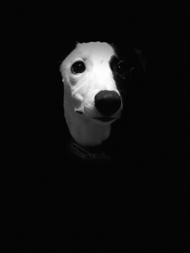dog - Mammal