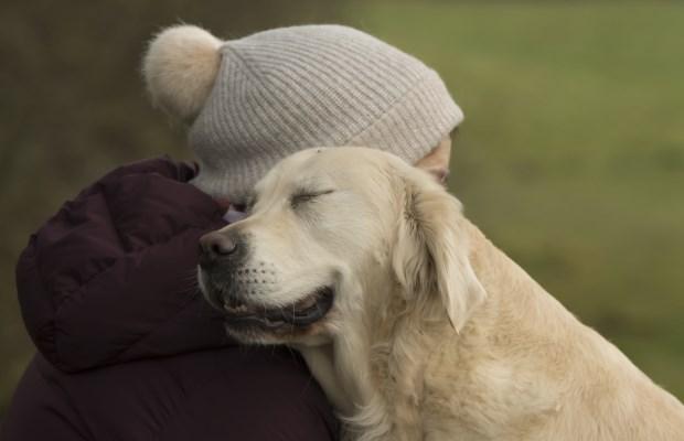 dog - Dog