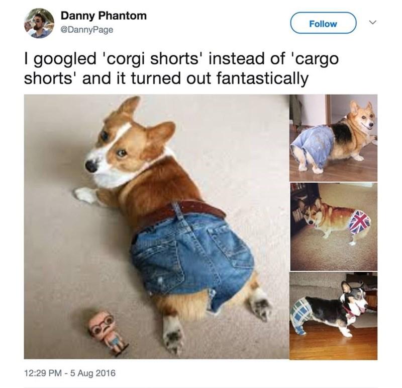 Welsh Corgi - Danny Phantom @DannyPage Follow I googled 'corgi shorts' instead of 'cargo shorts' and it turned out fantastically 12:29 PM-5 Aug 2016