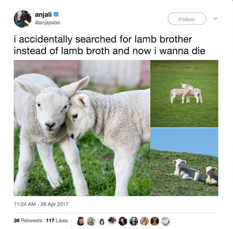 Pasture - anjali Follow @anjapatel i accidentally searched for lamb brother instead of lamb broth and now i wanna die 11:24 AM -26 Apr 2017 36 Retweets 117 Likes