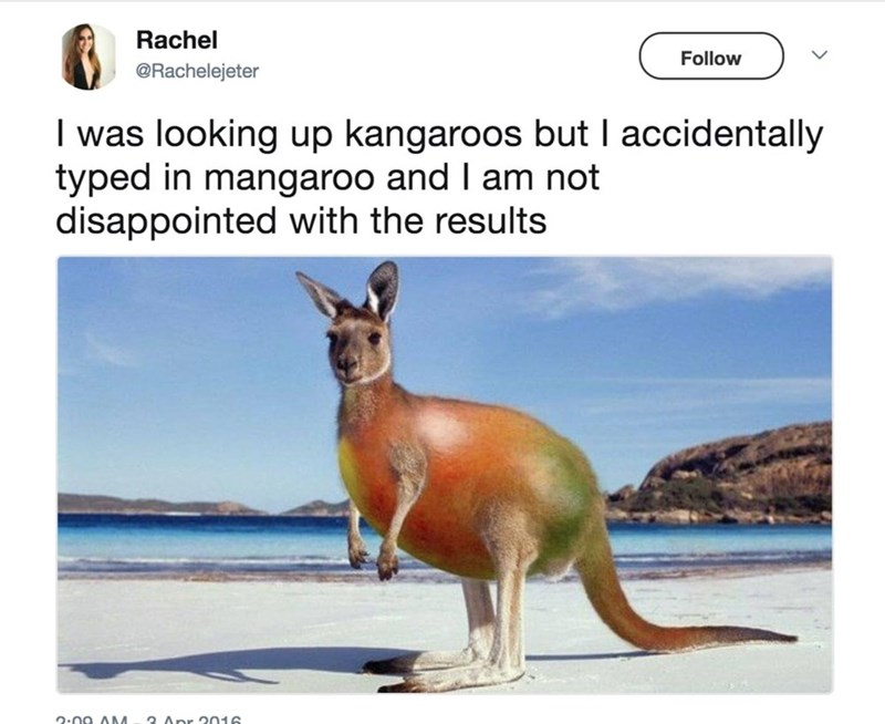 kangaroo - Rachel Follow @Rachelejeter I was looking up kangaroos but I accidentally typed in mangaroo and I am not disappointed with the results Apr 2016 2.na AM