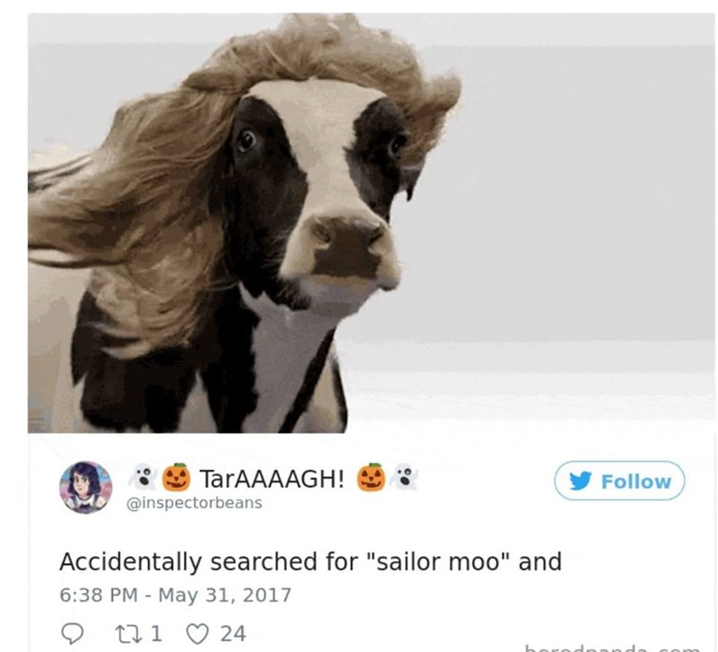 """Snout - TarAAAAGH! Follow @inspectorbeans Accidentally searched for """"sailor moo"""" and 6:38 PM - May 31, 2017 21 24"""