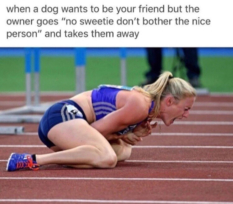 """Sports - when a dog wants to be your friend but the owner goes """"no sweetie don't bother the nice person"""" and takes them away"""