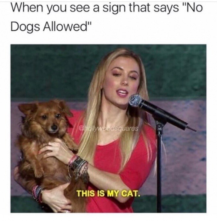 """Canidae - When you see a sign that says """"No Dogs Allowed"""" @hdllywoodsquares THIS IS MY CAT"""