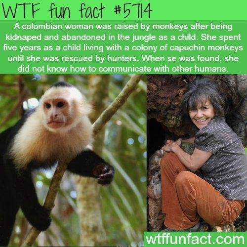 wtf facts - New World monkey - WTF fun fact #514 A colombian woman was raised by monkeys after being kidnaped and abandoned in the jungle as a child. She spent five years as a child living with a colony of capuchin monkeys until she was rescued by hunters. When se was found, she did not know how to communicate with other humans. wtffunfact.com