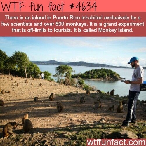 wtf facts - Adaptation - WTF fun fact #4634 There is an island in Puerto Rico inhabited exclusively by a few scientists and over 800 monkeys. It is a grand experiment that is off-limits to tourists. It is called Monkey Island. wtffunfact.com