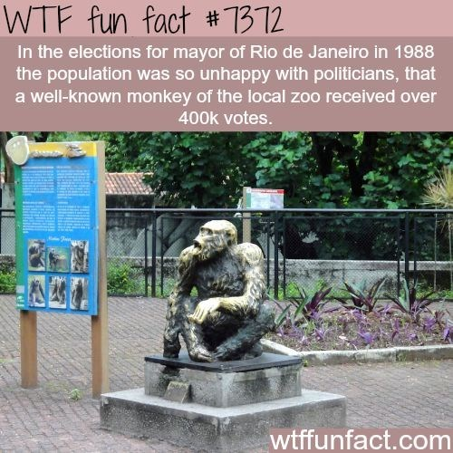 wtf facts - Sculpture - WTF fun fact # 1312 In the elections for mayor of Rio de Janeiro in 1988 the population was so unhappy with politicians, that a well-known monkey of the local zoo received over 400k votes. wtffunfact.com