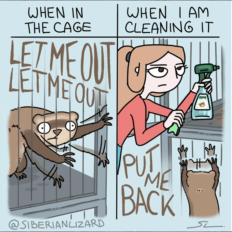 Cartoon - WHEN I AM CLEANING IT WHEN IN THE CAGE LETMEOU LETME QU PUT ME BАСK @SIBERIANLIZARD S