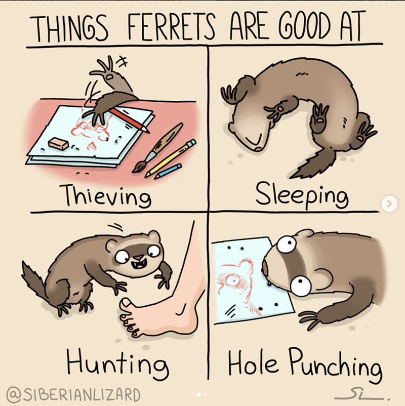 Tail - THINGS FERRETS ARE GOOD AT Sleeping Thieving Hole Punching Hunting @SIBERIANLIZARD