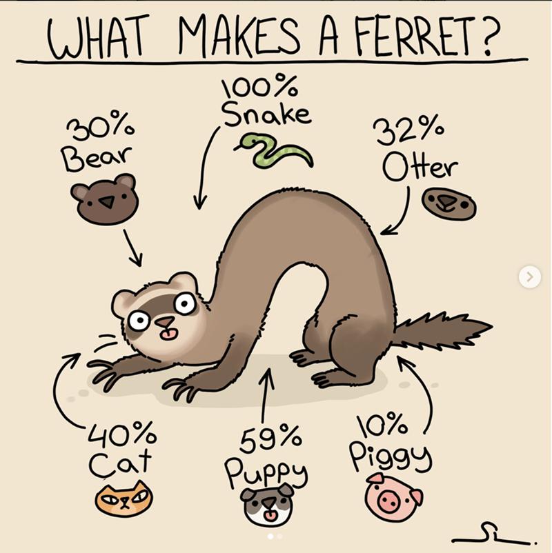 Ferret - JHAT MAKES A FERRET? 00% Snake 30% Bear 32% Ofer %Oh. 59% Puppy \0% Piggy Cat