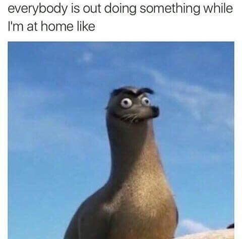 Gerald the sea lion meme about feeling unproductive