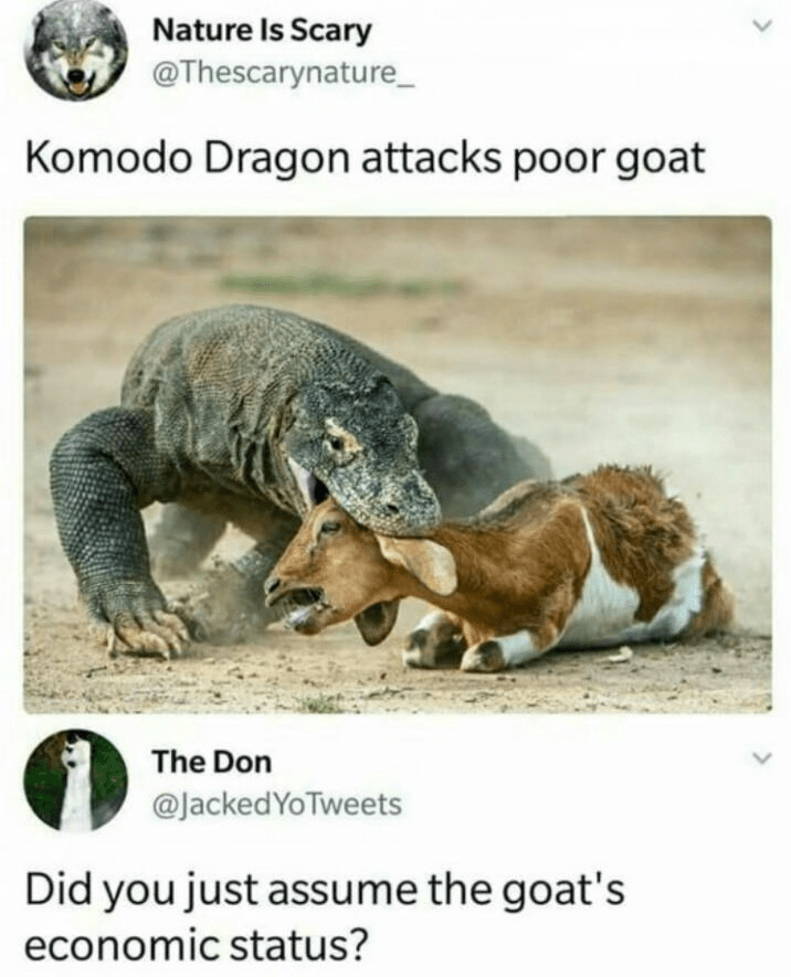 Terrestrial animal - Nature Is Scary @Thescarynature Komodo Dragon attacks poor goat The Don @JackedYoTweets Did you just assume the goat's economic status?