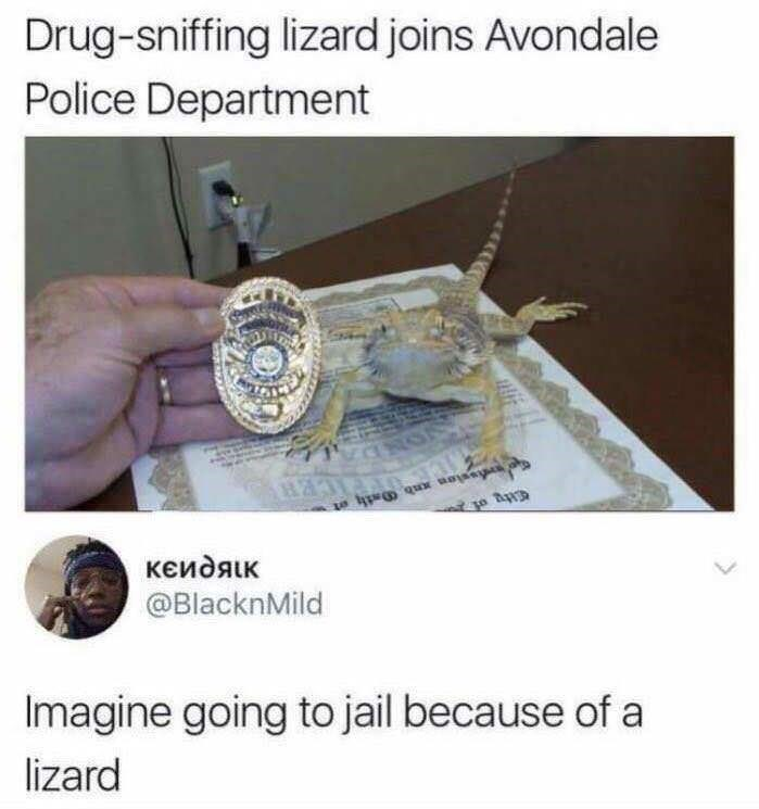Organism - Drug-sniffing lizard joins Avondale Police Department кеидяік @BlacknMild Imagine going to jail because of a lizard