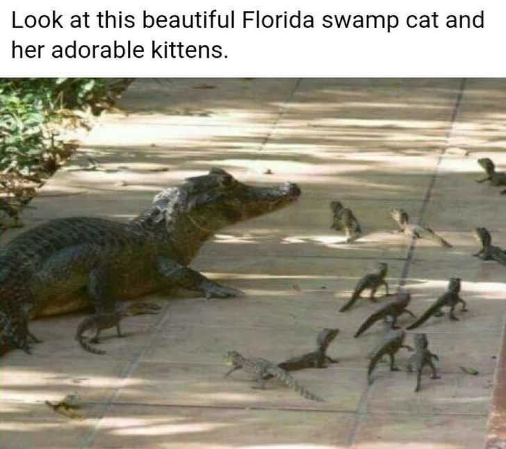 Reptile - Look at this beautiful Florida swamp cat and her adorable kittens.