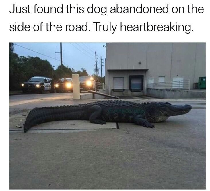 Crocodilia - Just found this dog abandoned on the side of the road. Truly heartbreaking.