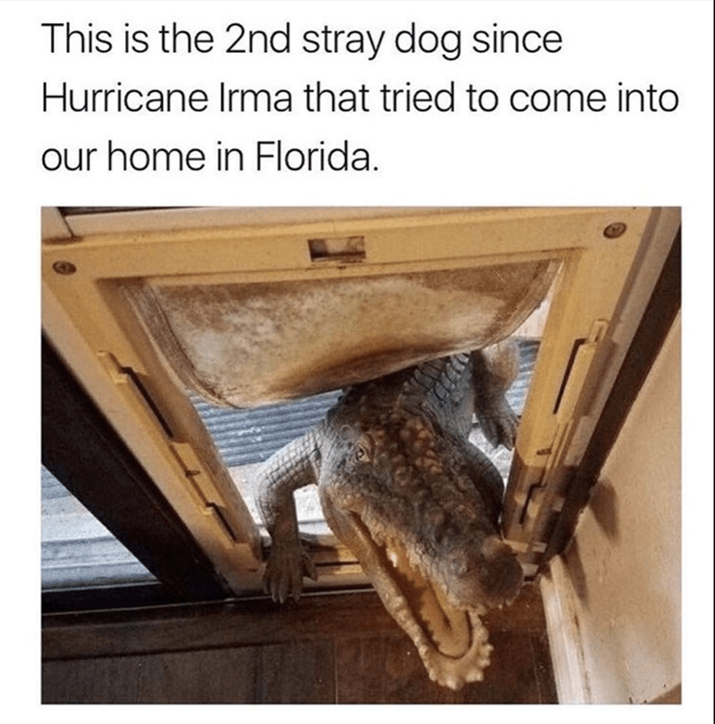 Wood - This is the 2nd stray dog since Hurricane Irma that tried to come into our home in Florida.