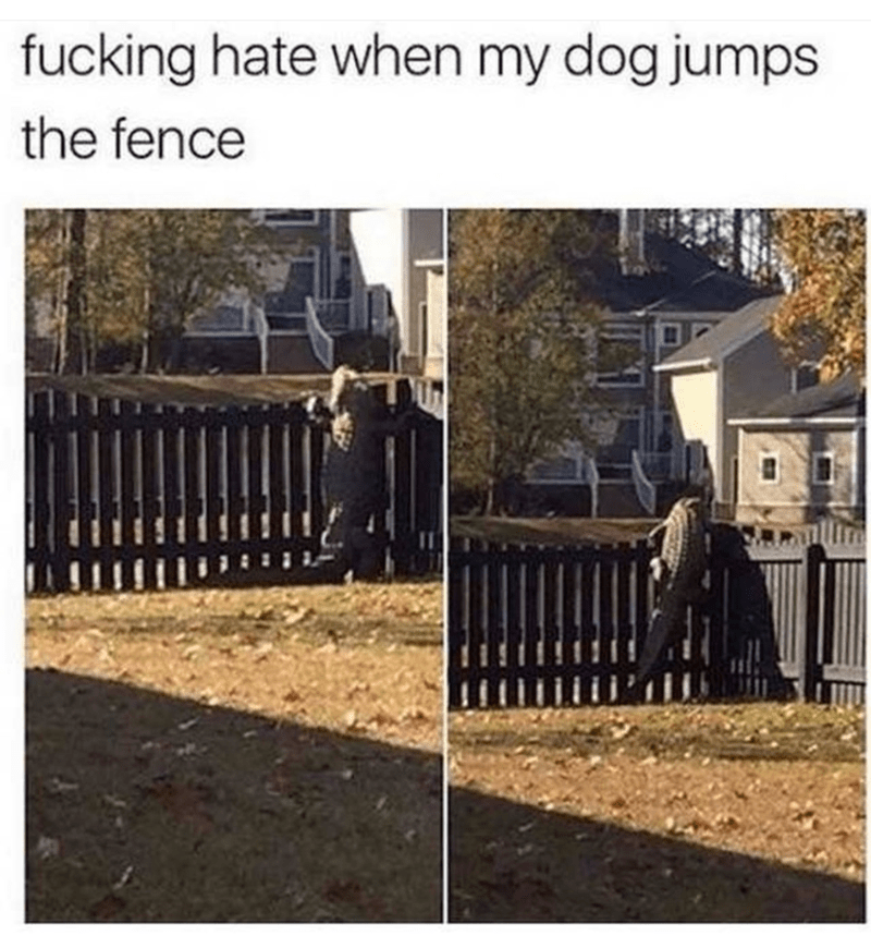 Fence - fucking hate when my dog jumps the fence
