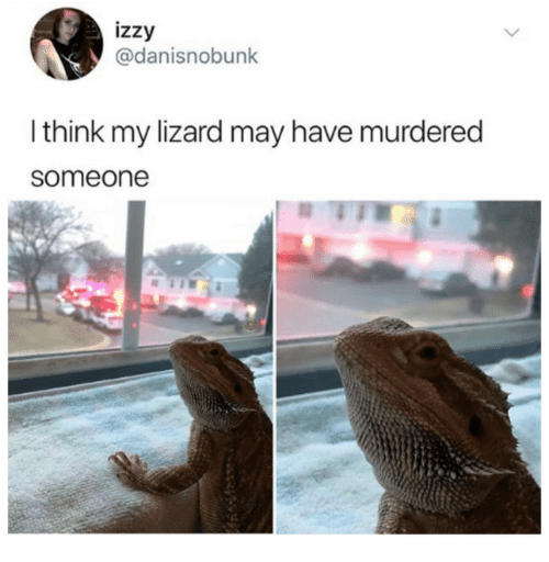 Adaptation - izzy @danisnobunk I think my lizard may have murdered someone