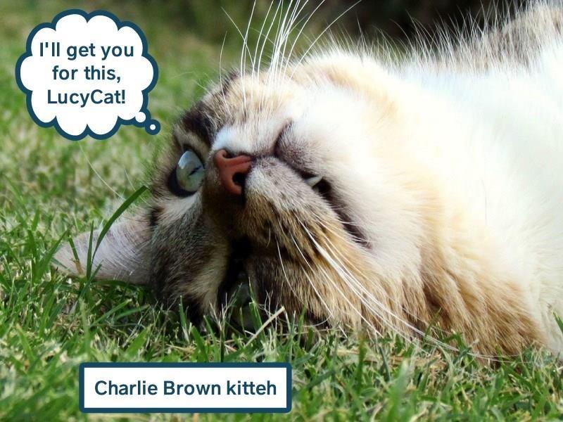 Charlie Brown kitteh