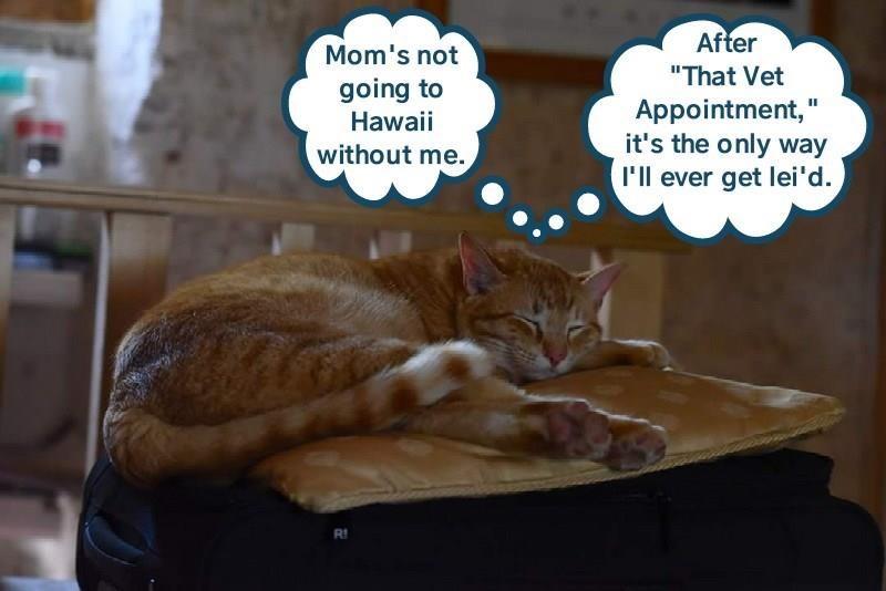 Imagini amuzante si haioase - Aloha!