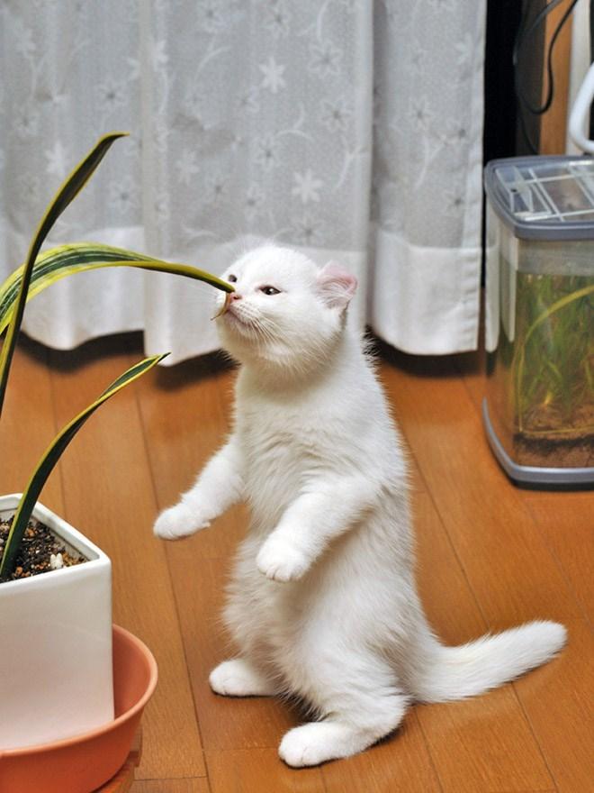 cat standing up - Cat