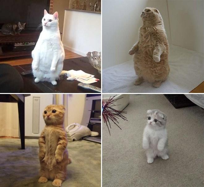 cat standing up - White
