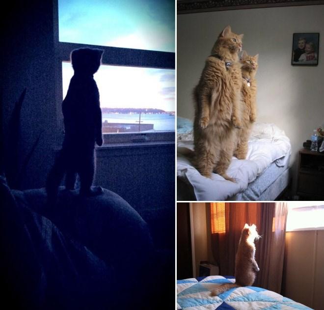 cat standing up - Sky