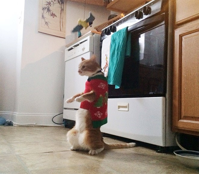 cat standing up - Dog