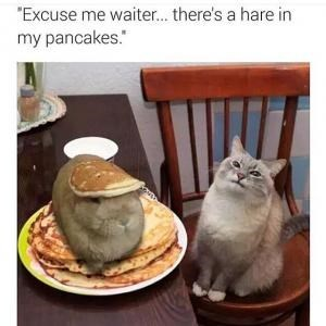"Cat - ""Excuse me waiter... there's a hare in my pancakes."