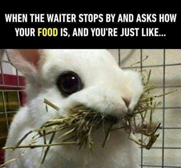 Photo caption - WHEN THE WAITER STOPS BY AND ASKS HOW YOUR FOOD IS, AND YOU'RE JUST LIKE. nyBeng.com