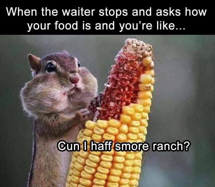 Corn on the cob - When the waiter stops and asks how your food is and you're like... Cun I haff smore ranch?