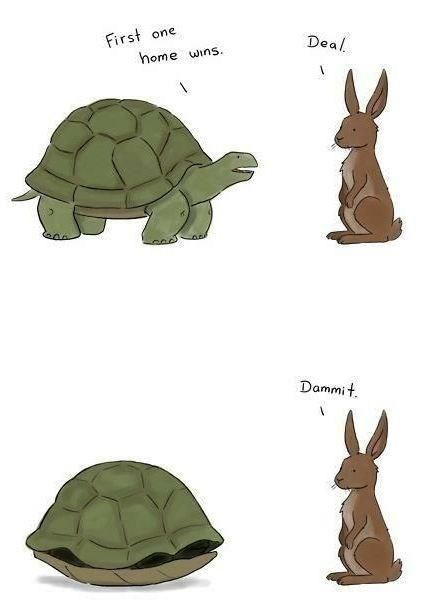 turtles meme - Tortoise - First home wins one Deal Dammit
