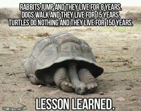 turtles meme - Tortoise - RABBITS JUMPANDTHEYLVEFOR8YEARS DOGS WALKANDTHEYLIVE FOR15YEARS TURTLES DONOTHING ANDTHEYLIVE FOR 150YEARS LESSON LEARNED HEMETAPICTURE COM