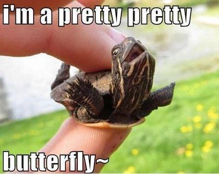 turtles meme - Adaptation - I'm a pretiy pretty butterfly