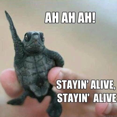 turtles meme - Turtle - AHAH AH! STAYIN ALIVE STAYIN' ALIVE quickmeme.com