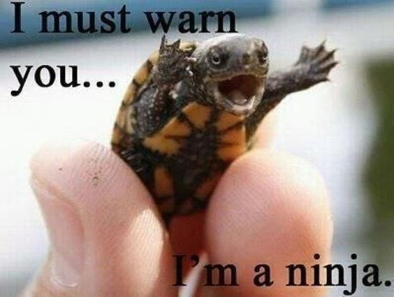 turtles meme - Kinosternidae - I must warn you... I'm a ninja.