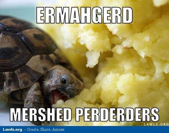 turtles meme - Tortoise - ERMAHGERD MERSHED PERDERDERS LAWLZ.ORG Lawlz.org- Create. Share. Amuse