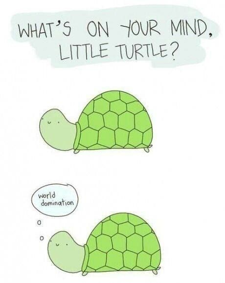 turtles meme - Tortoise - WHAT'S ON YOUR MIND, LITTLE TURTLE? world domination